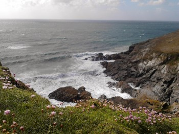 Coastline with pink thrift, Holywell Bay, May 2011