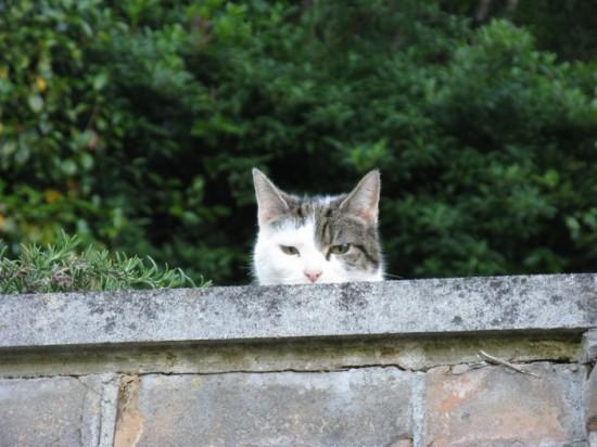 cat at the max